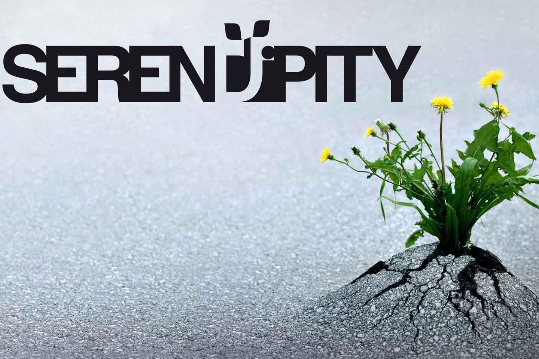 Caso di studio: branding Serendipity, web design (fase 5)